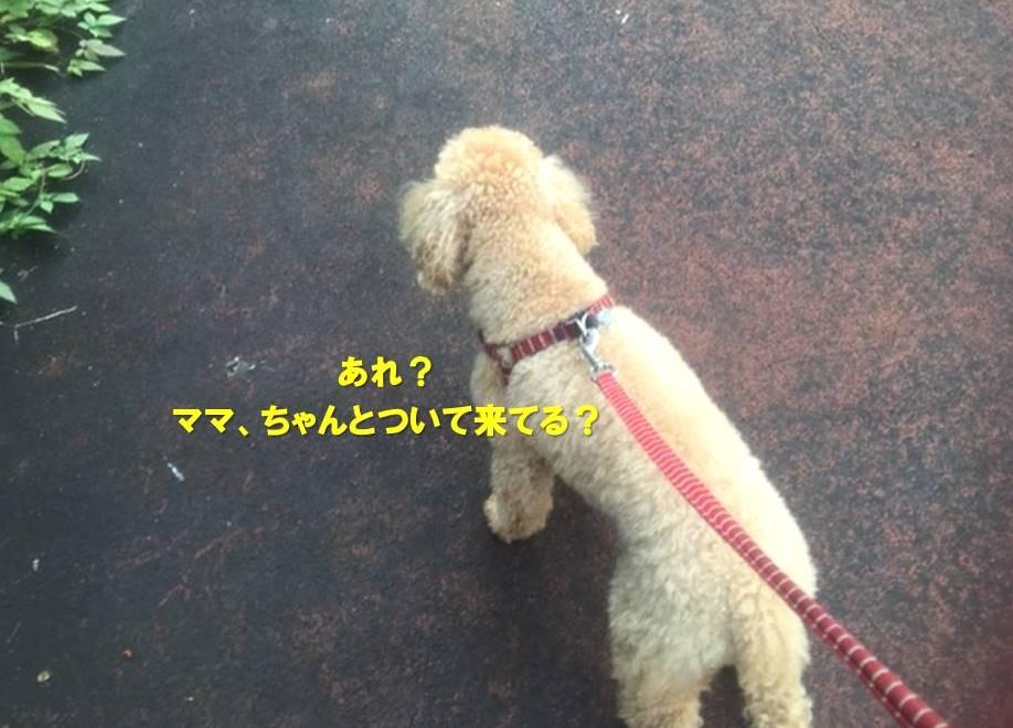 f:id:nanachan59:20201101162924j:plain