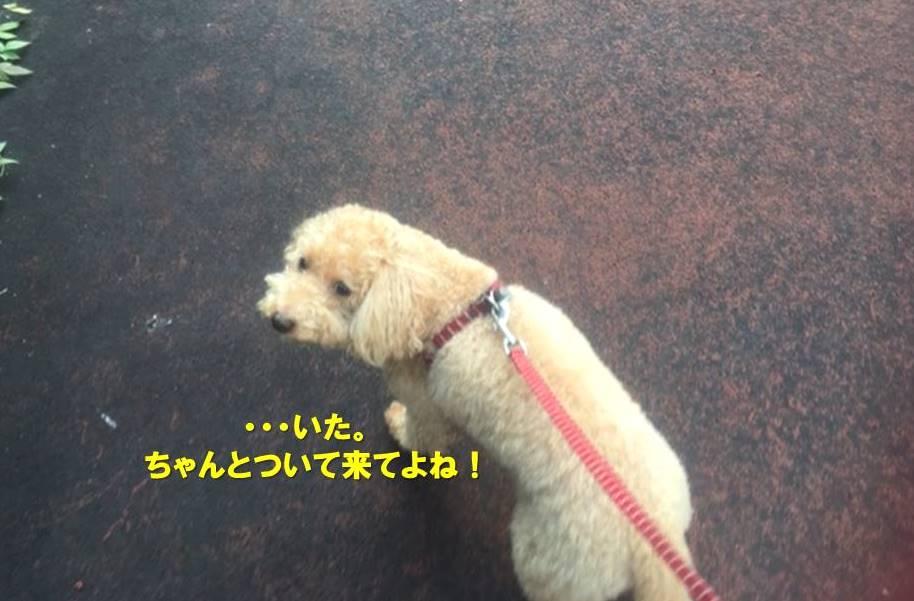 f:id:nanachan59:20201101163533j:plain