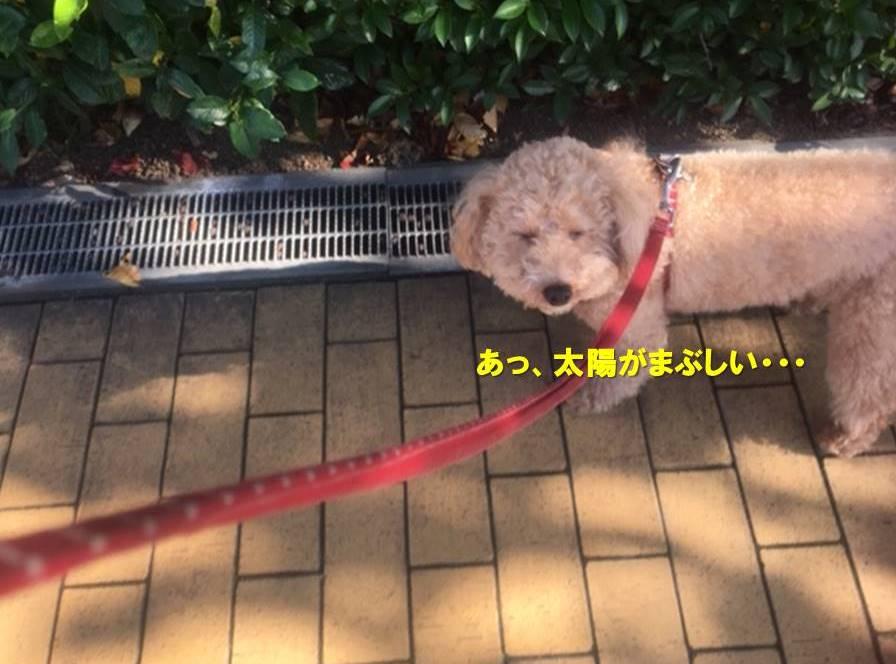 f:id:nanachan59:20201101164005j:plain