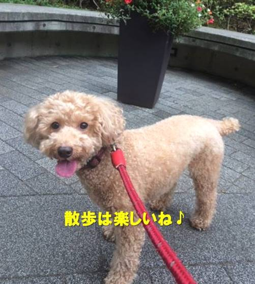 f:id:nanachan59:20201101164441j:plain