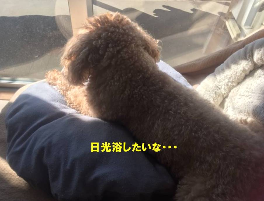 f:id:nanachan59:20201206141942j:plain
