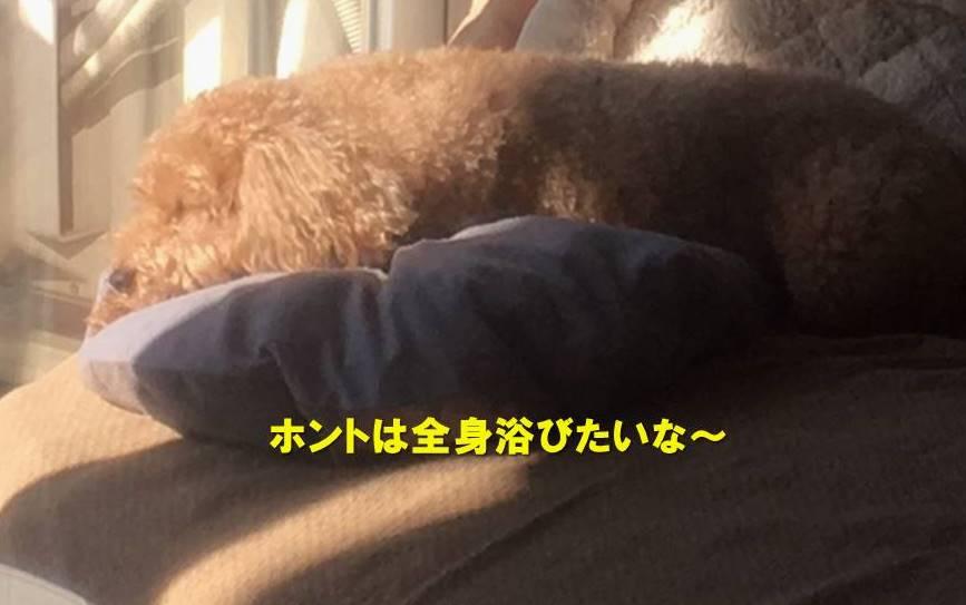 f:id:nanachan59:20201206143422j:plain