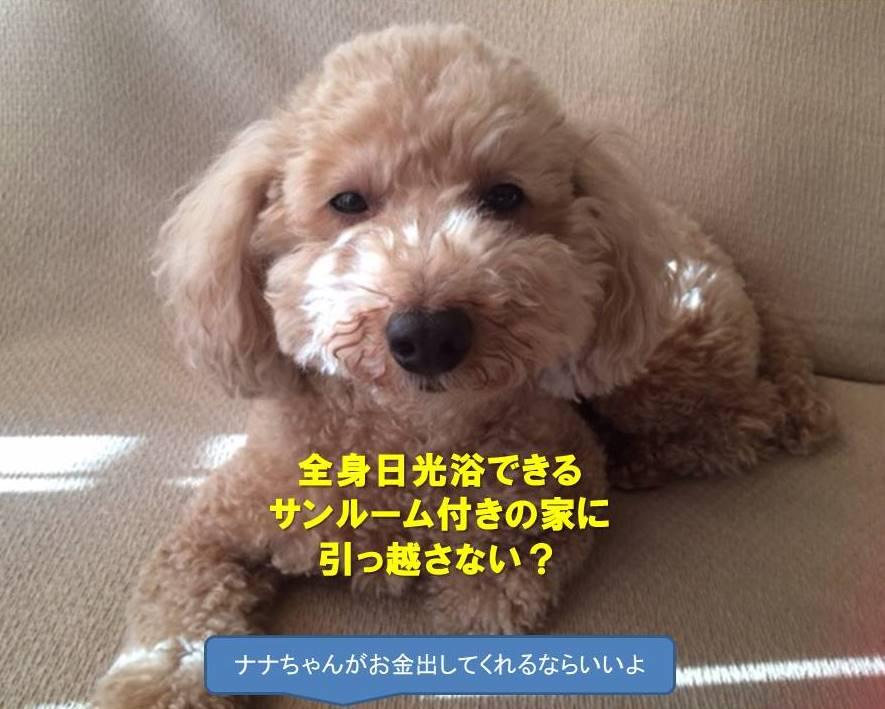 f:id:nanachan59:20201206144319j:plain