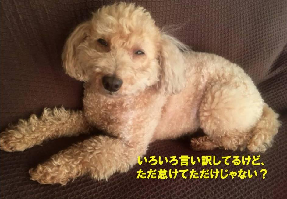 f:id:nanachan59:20210421183100j:plain