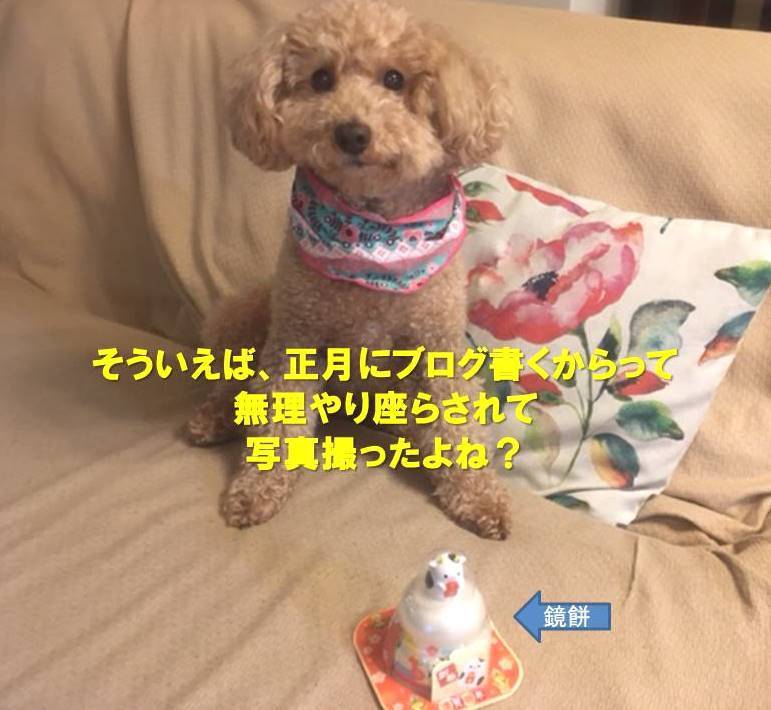 f:id:nanachan59:20210421212850j:plain