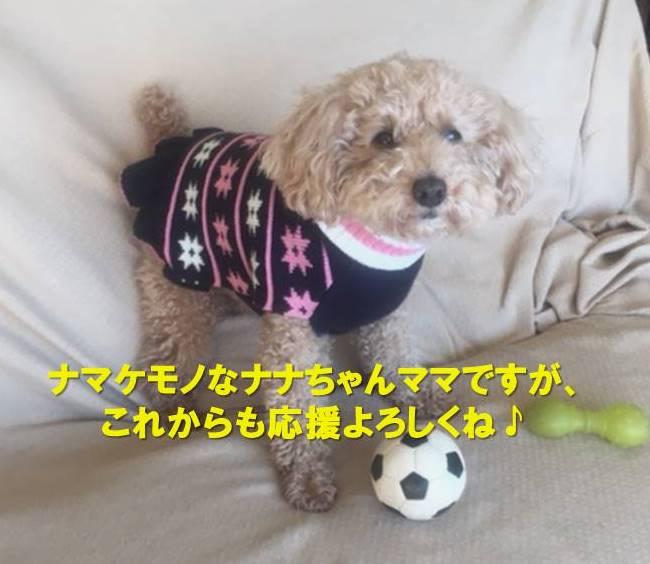f:id:nanachan59:20210421213536j:plain