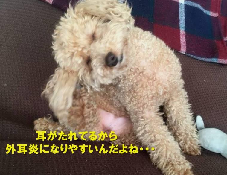 f:id:nanachan59:20210427171234j:plain