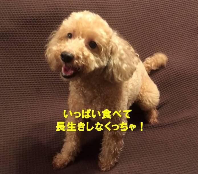 f:id:nanachan59:20210427172503j:plain