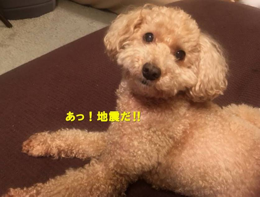 f:id:nanachan59:20210504222047j:plain