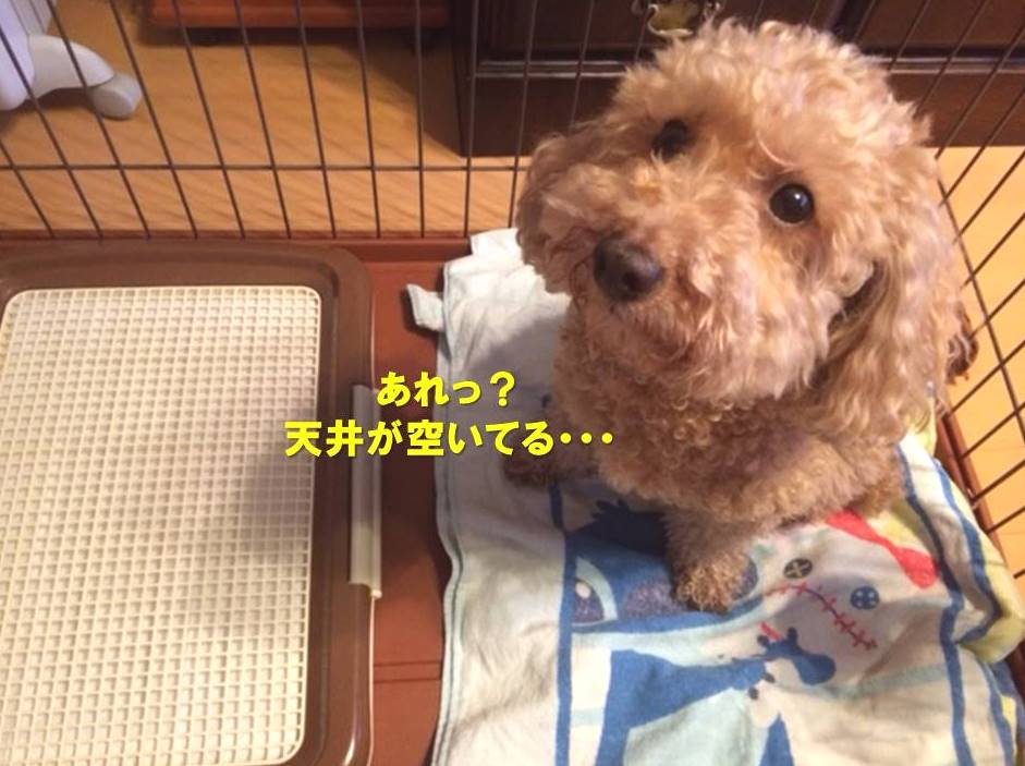 f:id:nanachan59:20210506165938j:plain