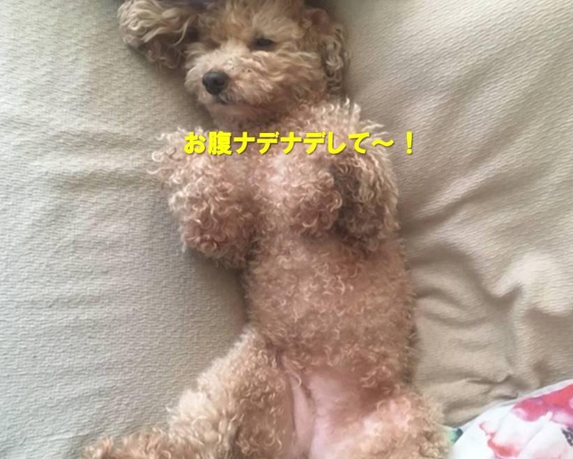 f:id:nanachan59:20210515160511j:plain