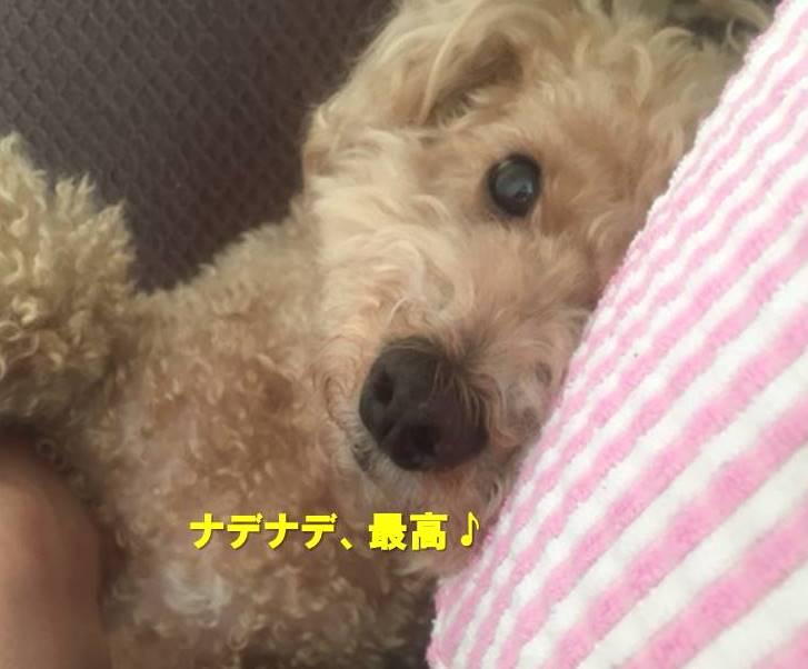f:id:nanachan59:20210515161205j:plain