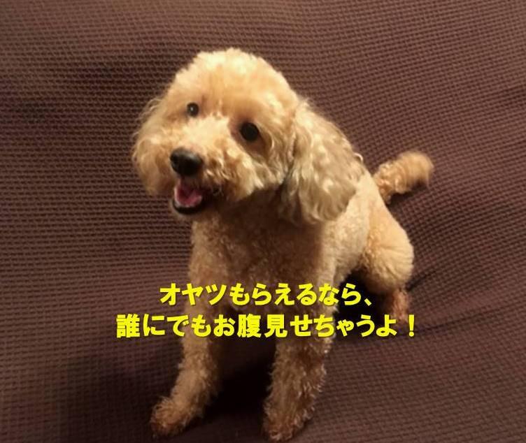 f:id:nanachan59:20210515161619j:plain