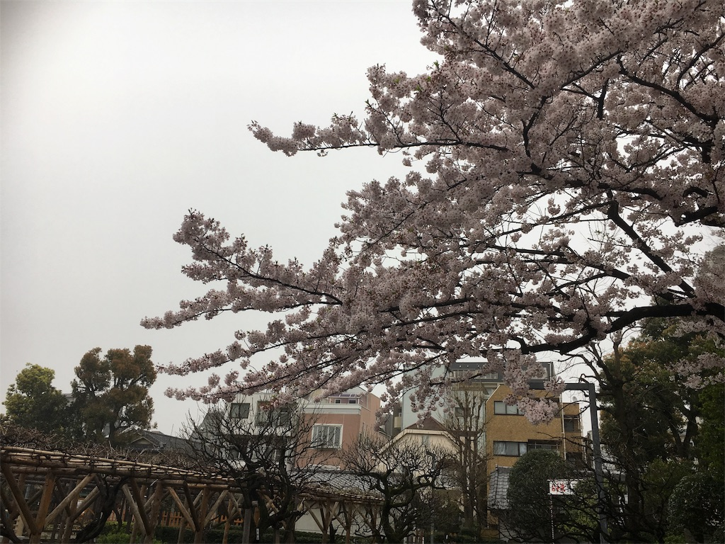 f:id:nanacochan07:20170411010433j:image