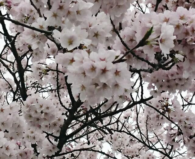 f:id:nanairokobo1011:20170412065216j:image