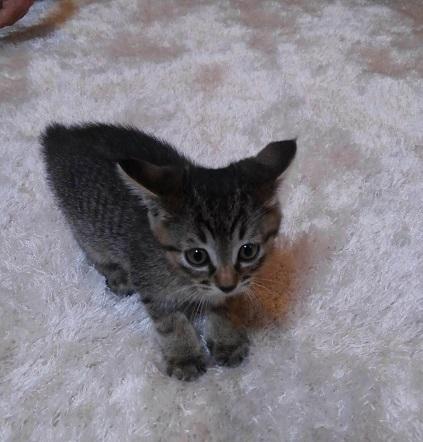 イカ耳子猫