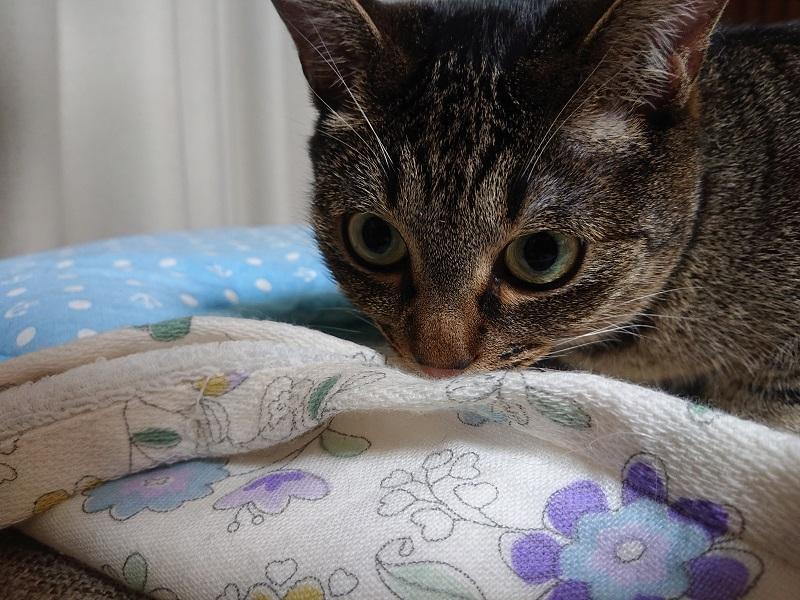 クンクンする猫