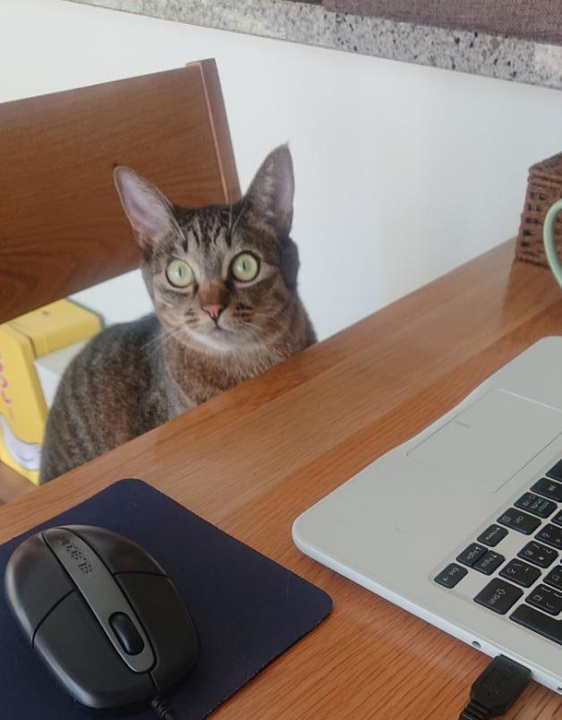 椅子に座るネコ