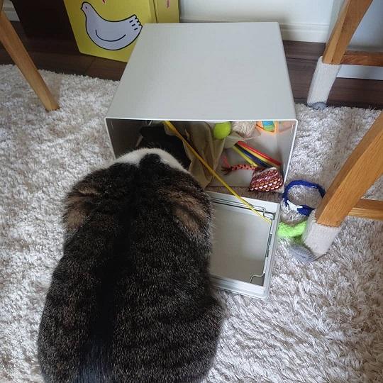 おもちゃ箱を漁る猫