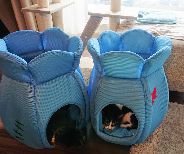 金魚鉢ベッド