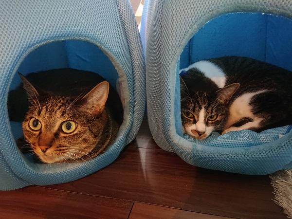金魚鉢ベッドでくつろぐ猫