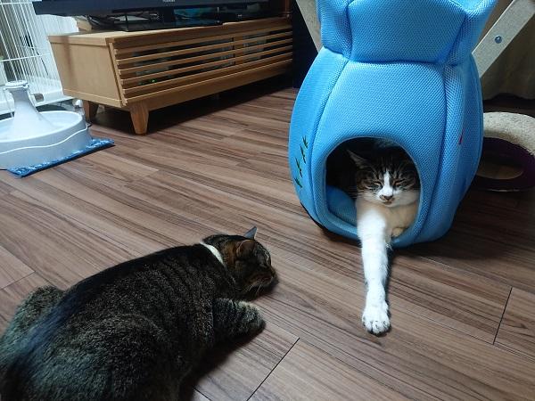 金魚鉢ベッドで寝るネコ