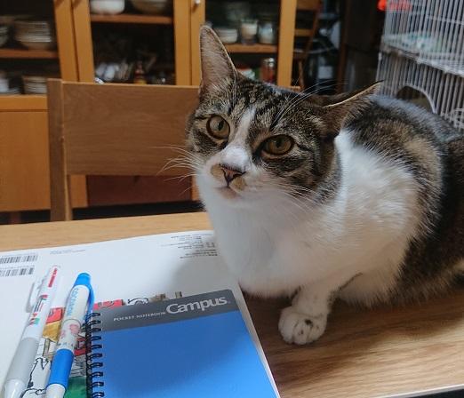 勉強応援する猫