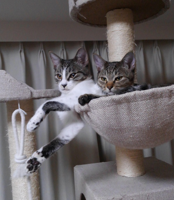 ハンモックに入る2匹の猫