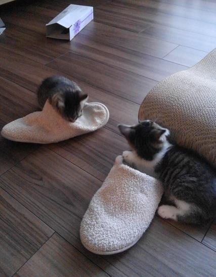 スリッパにじゃれる猫