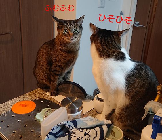 キッチンにのぼる猫