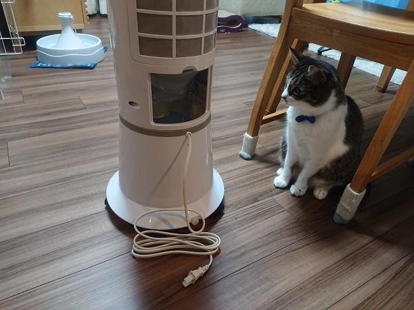 冷風扇と猫
