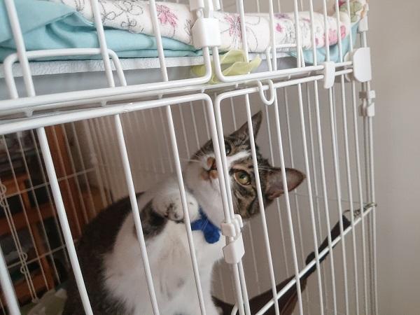 ケージで遊ぶ猫