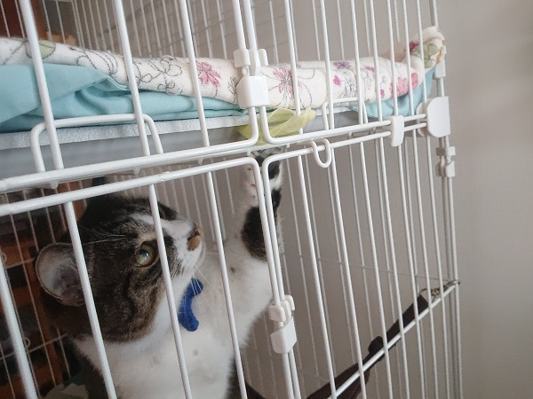 ケージで遊ぶ猫2