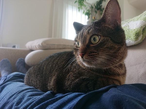 香箱座りの猫