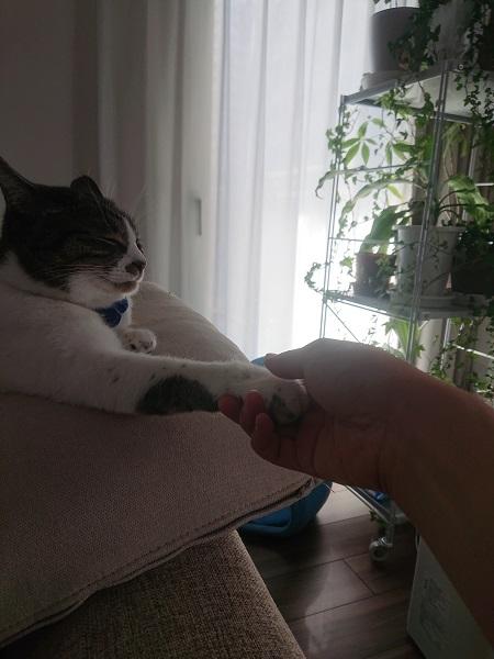 猫と握手3