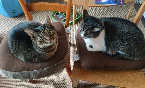 骨盤矯正クッションと猫