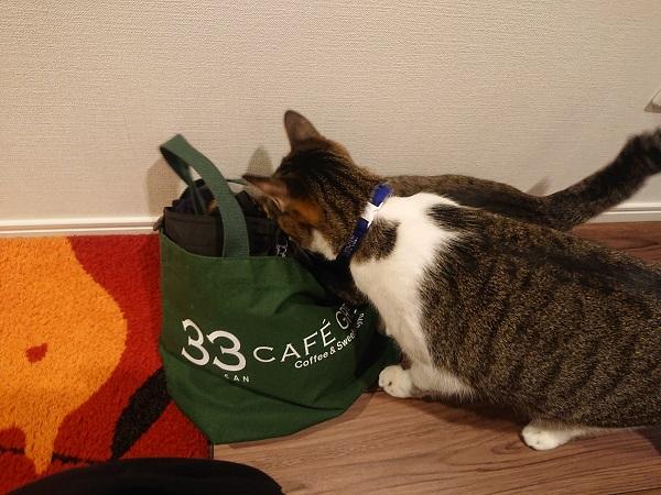 バッグをのぞく猫