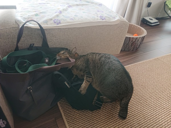 猫すりすり