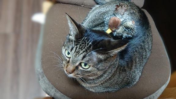 猫とコマドリ