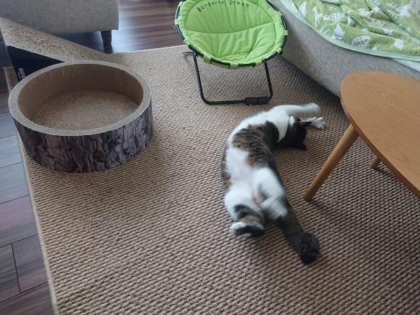 のびのびする猫