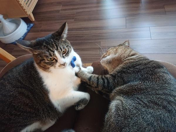 猫のケンカ