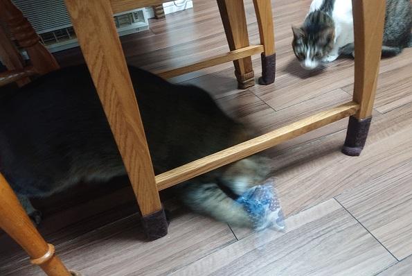猫レクション 猫マキビシ