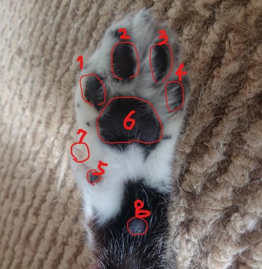 猫の前脚の肉球
