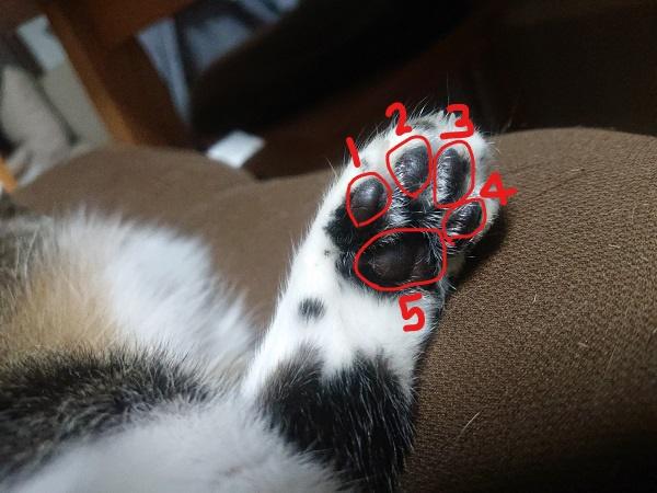 猫 後ろ脚 肉球