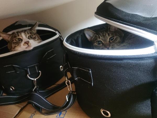 キャリーバッグと猫