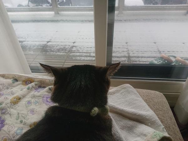 クルルゥと鳴く猫