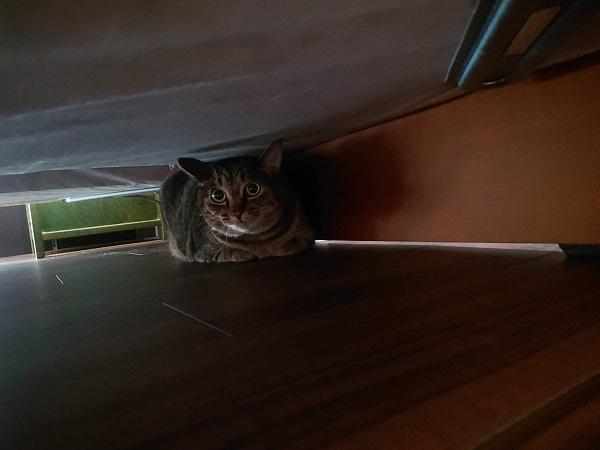 ベッド下に隠れる猫