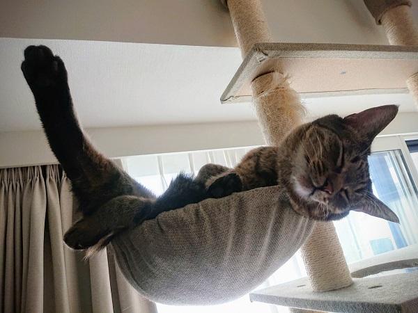 ヨガポーズの猫