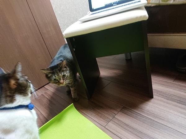 ヨガマットと猫