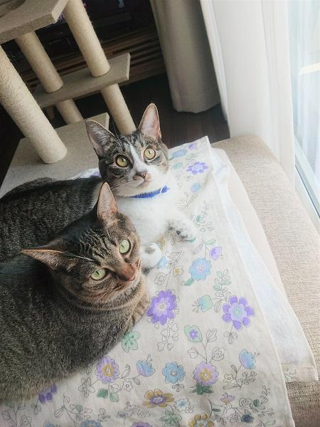 姉妹猫2歳